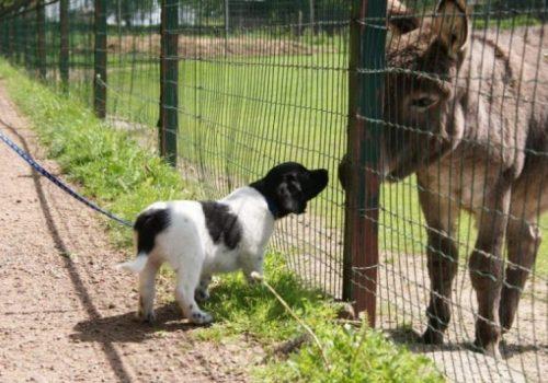 kennismaking met ezel